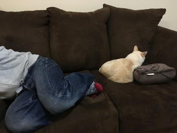ソファと猫と人