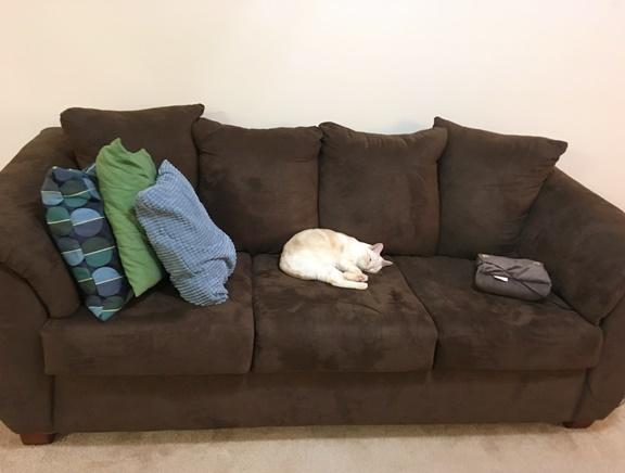 猫とソファ