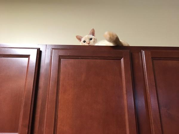 棚の上で落ち着く猫