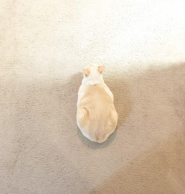 同化する猫
