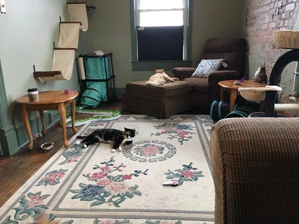 猫カフェ部屋