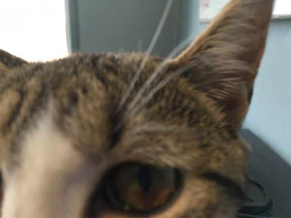 猫カフェかわいこちゃん