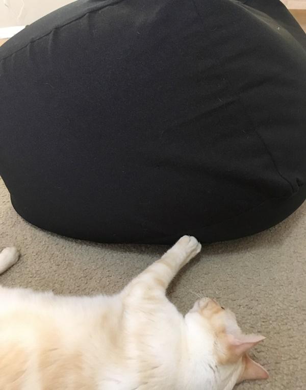 人をダメにするソファと猫