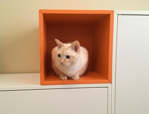 カラフルカラーボックスと猫