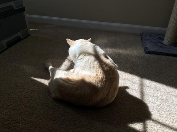日の当たる場所で毛繕いする猫