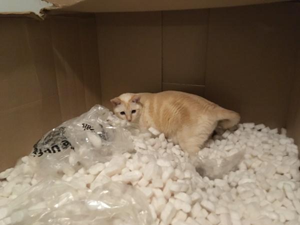 テンション上がる猫