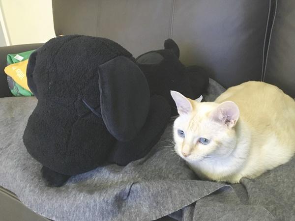 スヌーピーと猫