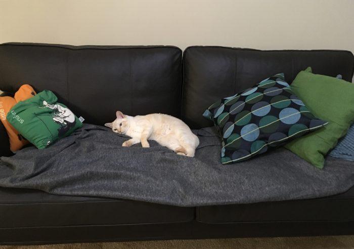 ソファを独り占めする猫