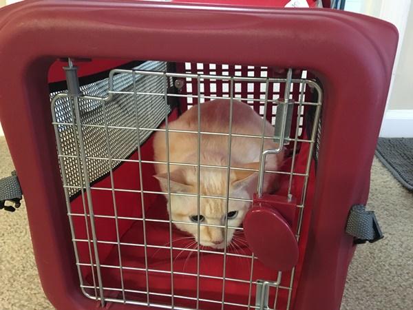 留守番用ゲージの中の猫
