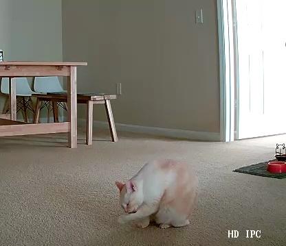 カメラに写る猫
