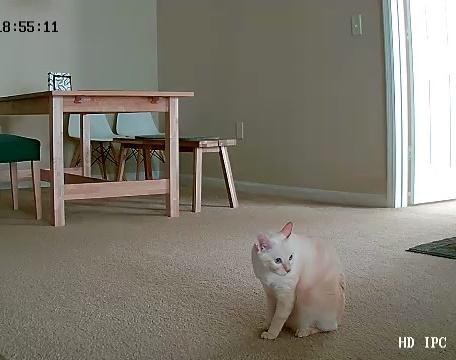 カメラに映る猫
