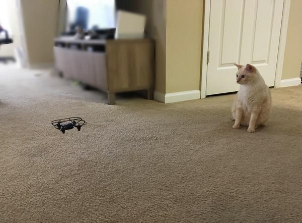 ドローンと猫