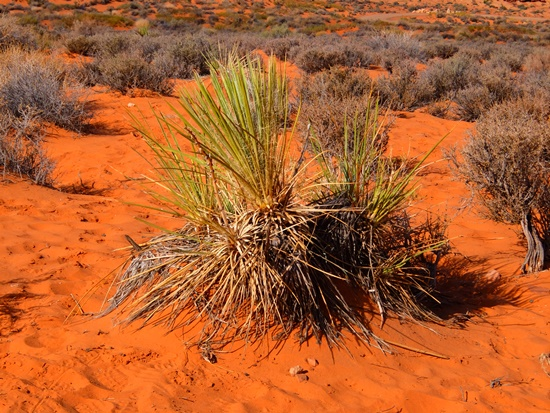 砂漠の植物達