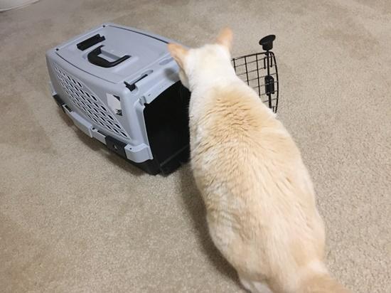 ケージに入ろうとする猫