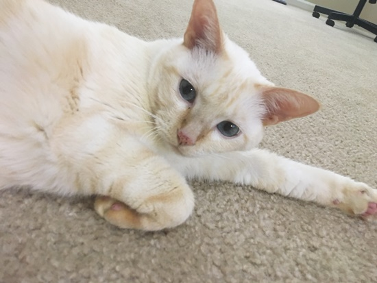 毛密度の高い猫