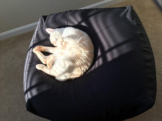 日に照らされる猫