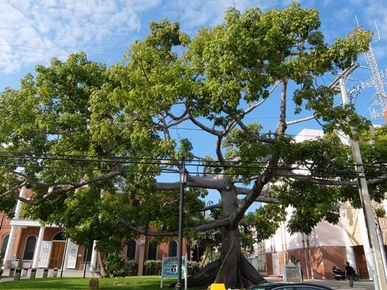 キーウェストの木