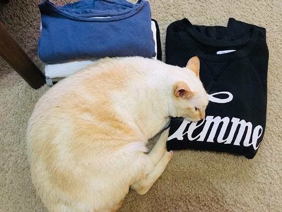 服に寄り添う猫