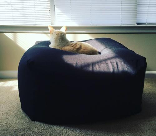 光に照らされる猫